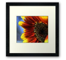 A Sunflower Set ( 6 ) Closing In Framed Print