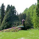 Peacock in Blooms by Ellanita