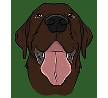 Happy Chocolate Lab  Photographic Print