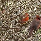 Cardinal rule by MarianBendeth