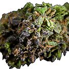 Purple Bud #8 by sensameleon