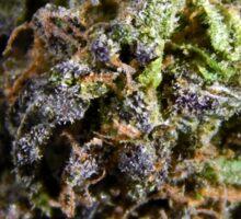 Purple Bud #8 Sticker
