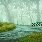 Rain and Fog on Waterfall Way by Clare Colins