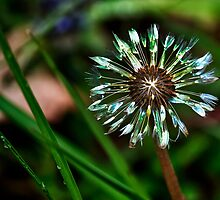 Dandelion Will Make You Wise by BelindaGreb