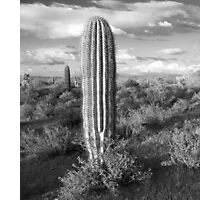 In the Desert Photographic Print