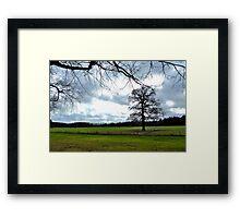 A great old oak-tree Framed Print