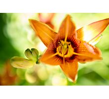 Day Lily Abstract Photographic Print