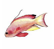 Pink Fish Photographic Print