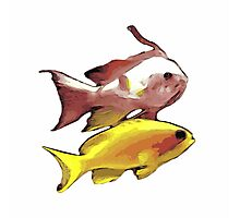 Pink and Yellow Fish Photographic Print