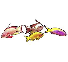 Three Fish Photographic Print