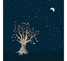 Moonlit Tree Photographic Print