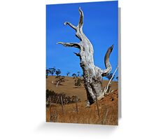 Silent Sentinel Greeting Card