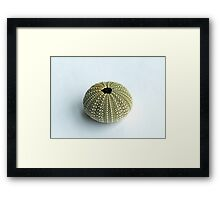 Sea Urchin Shell Framed Print