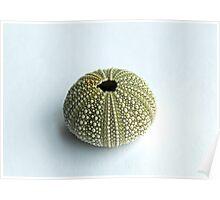 Sea Urchin Shell Poster