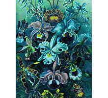 Ice Blue Vintage Flowers  Photographic Print