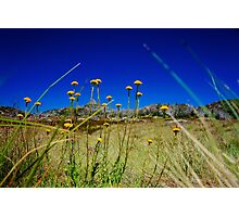 The Buds of the Horn Photographic Print