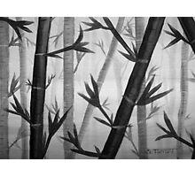 Bamboo Grey Photographic Print