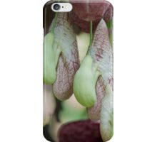 exotic plant iPhone Case/Skin