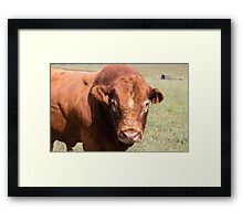 You don't scare me! Framed Print