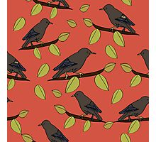 Starlings in Spring Photographic Print