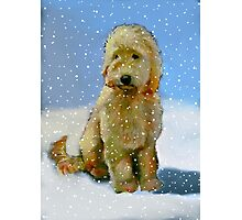 Golden Doodle Dog in Snow: Original Oil Pastel Painting Photographic Print