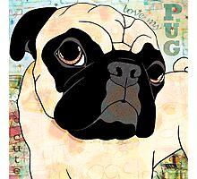 Smug Pug Photographic Print