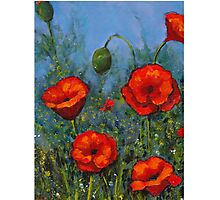 Red Poppies: Original Floral Painting Photographic Print