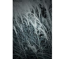 Tall Grass in the Wind Photographic Print