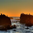 Seagulls In The Sunset by K D Graves Photography