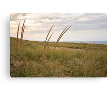 Reeds on Race Point Beach, Cape Cod National Seashore, Massachusetts Canvas Print