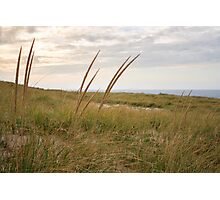 Reeds on Race Point Beach, Cape Cod National Seashore, Massachusetts Photographic Print