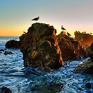 Seagulls At Laguna Beach by K D Graves Photography