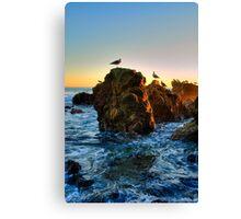 Seagulls At Laguna Beach Canvas Print