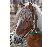 Horse Head close-up Photographic Print