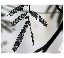 A Silhouette Of A Plant Poster