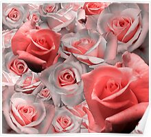 Pink & White Rose Cluster (Possible Valentine) Poster