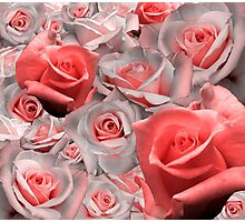 Pink & White Rose Cluster (Possible Valentine) Photographic Print