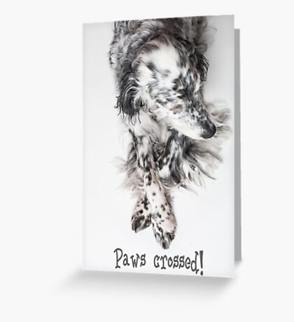 Good luck, paws crossed! Greeting Card