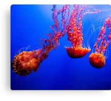Peaceful Ocean Jellyfish Canvas Print
