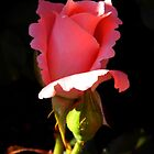 Curly Rose by WildestArt