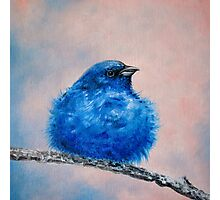 Small Indigo bird on a tree Photographic Print