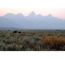 Grand Teton Moose Photographic Print