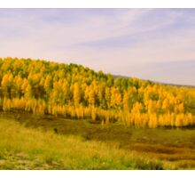 Colorado Aspens Sticker