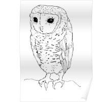Little Owl - black ink Poster