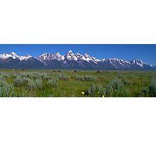 Grand Teton Bison panorama Photographic Print