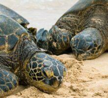 Green Sea Turtles Sticker