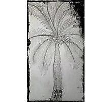 palmiye Photographic Print
