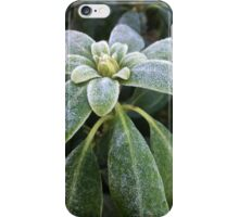 Winter freshness iPhone Case/Skin