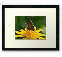 Yellow Lunch #2 Framed Print