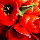 Flaming Tulips by Fara